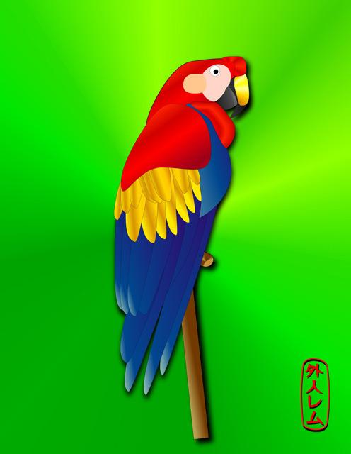 Brazil - Parrot